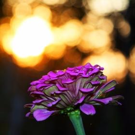 dusk and colour
