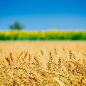 Harvest - Karakter