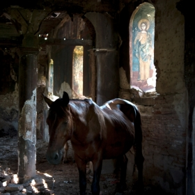 Horse seeking enlightenment