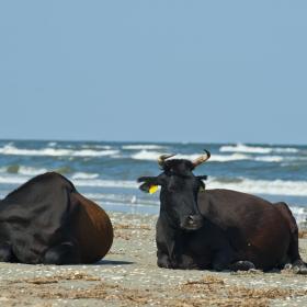 Nomad - Pe plaja
