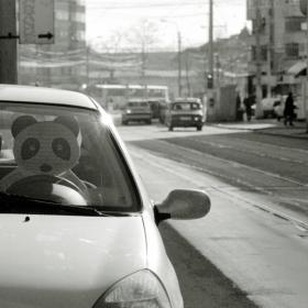 panda driver