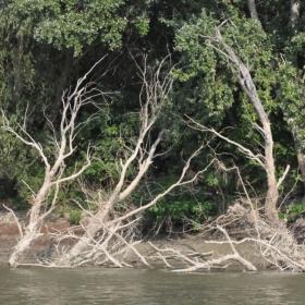 Renasterea in insula Mare a Brailei ..pe Dunare