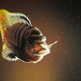 Unhappy fish...
