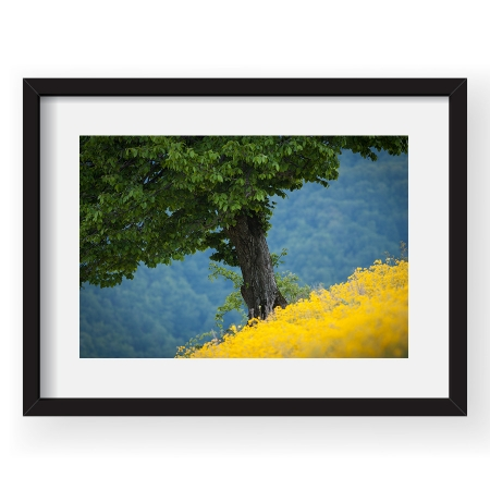 Culori singure - Tablou 40x60cm Dorin Bofan 01
