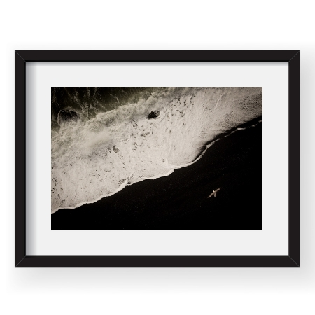 Fulmarus glacialis - Tablou 40x60cm Dorin Bofan 05